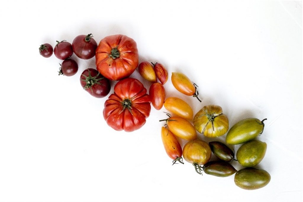 Tomaten Raritäten Landwirtschaft